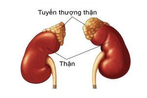 than-yeu-anh-huong-den-sinh-ly-1